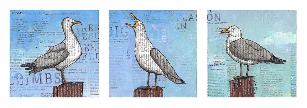 Trio of Seagulls