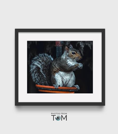 Sepia Squirrel