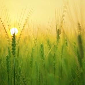 En-Soil-- for all things growing!
