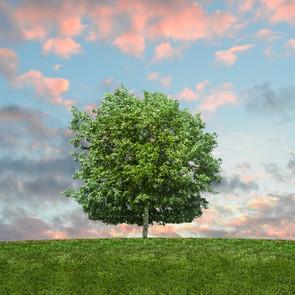 En-Soil is good for trees.