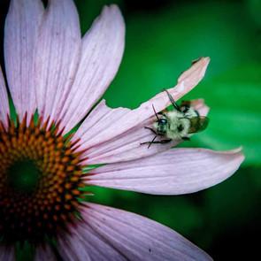 En-Soil is safe for pollinators._