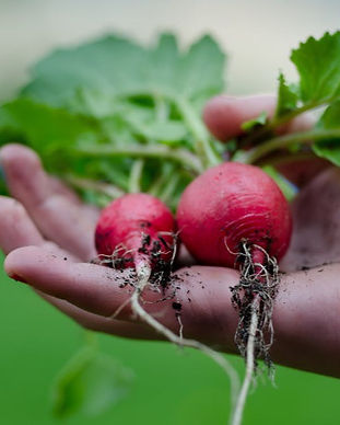 healthy-vegetables-restaurant-nature_edi