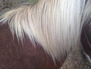 Equine Divine Conditioner