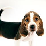 שיקוף | חוג טיפול עם בעלי חיים