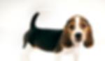 引取・合同火葬の可愛い犬