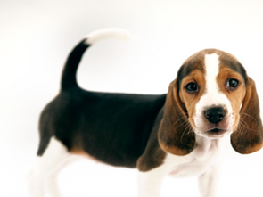 Wills & Probate | Who Looks After Your Pet When You Die?
