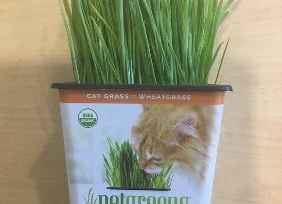 Petgreens cat grass
