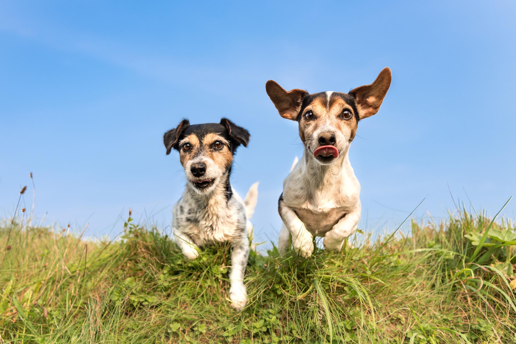 2 Pets/Large Yard
