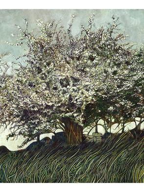 The Whitethorn Tree.jpg