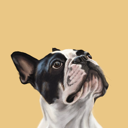 French bulldog pet portrait painting