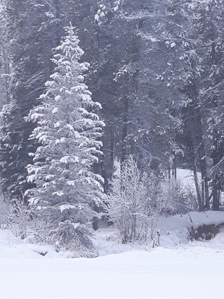 Snow Update, Friday, December 7th.