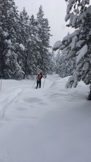 Some folks (xc athletes) just have to ski...no matter how much snow has come down.