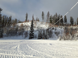 Friday, Saturday Update...ALL Groomed...Again. SNOW SNOW glorious snow.. a fresh fluffy 12 cm up her