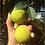Thumbnail: Limão