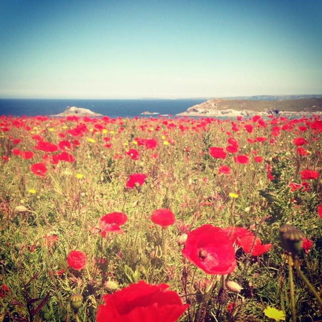 Glamping Cornwall