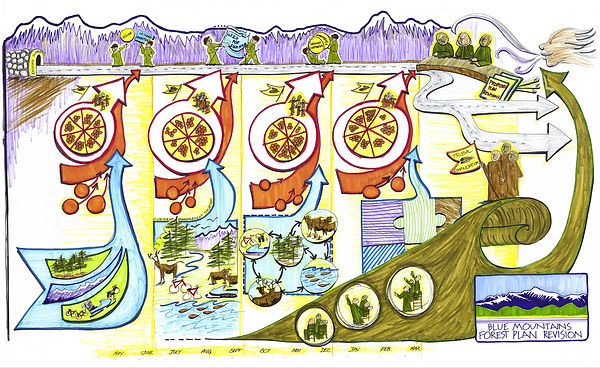 Drawing of a forest management plan