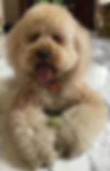 Regal Teddy-crop.jpg