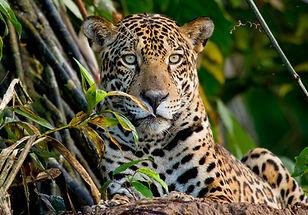 Fauna-Mammals-Lucas-Bustamante-30.jpg