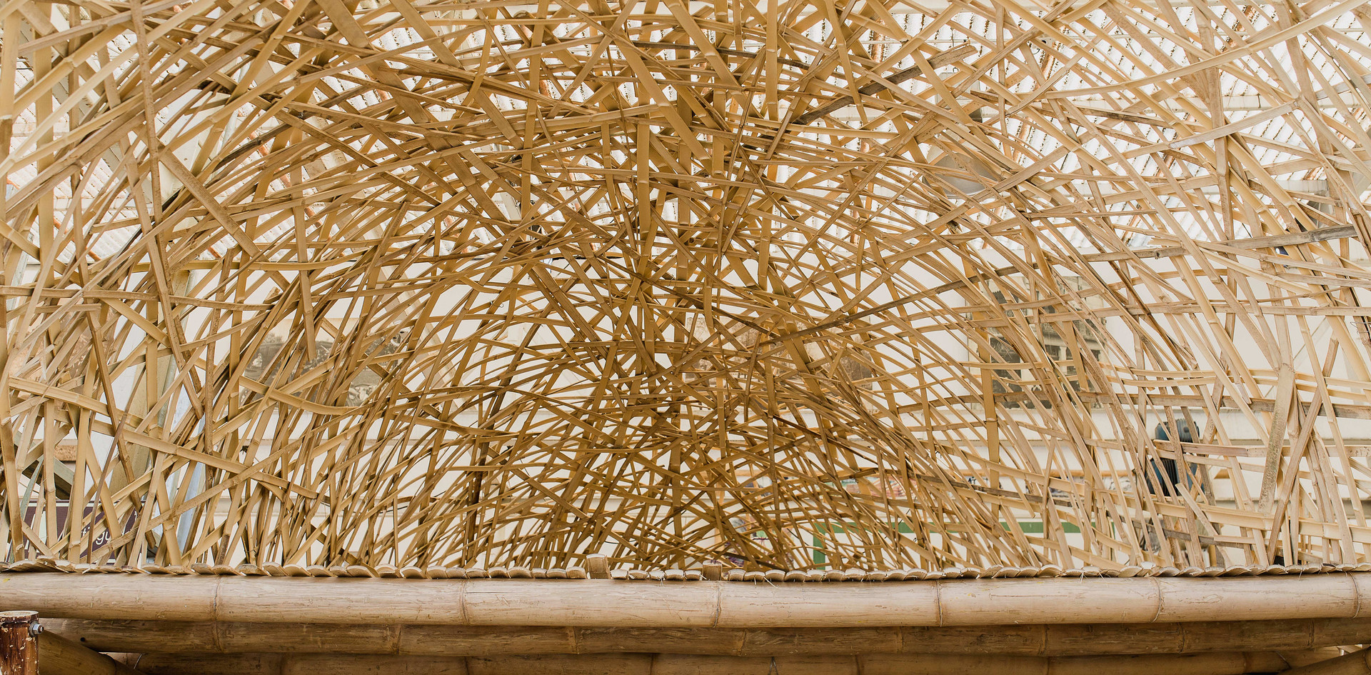 bambú-11.jpg