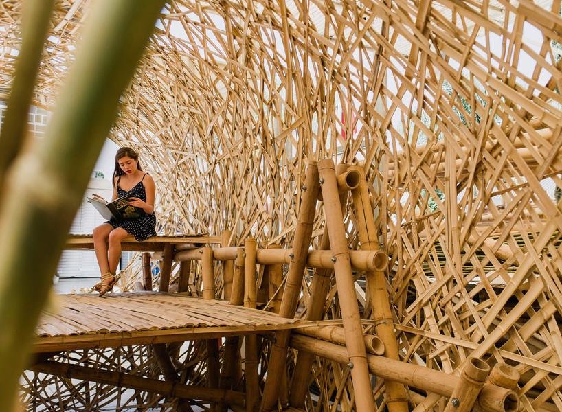 bambú-123.jpg