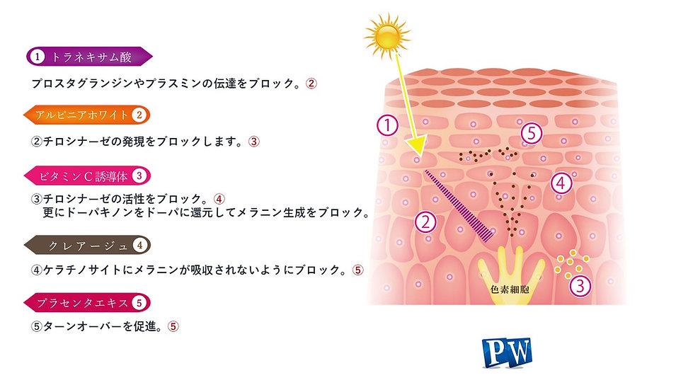 CellCarePW_presentation.jpg