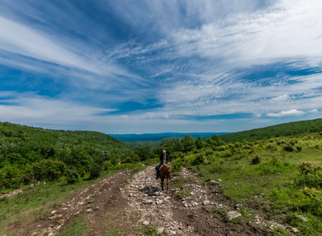 An Appalachian Horseback Riding Adventure