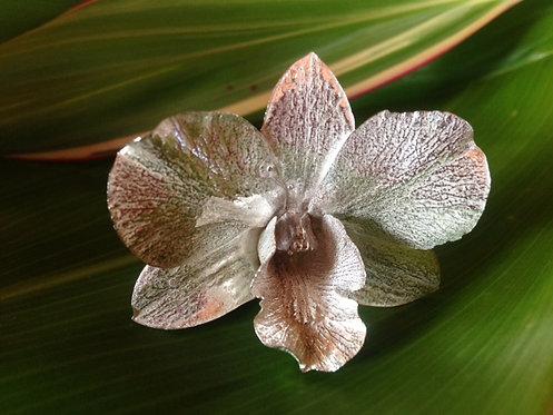 Dendrobium Broach