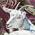 Galaxy Goat