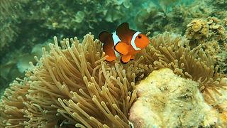 Bintan Snorkeling.jpg
