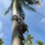 loola-binta-climb-coconut-tree