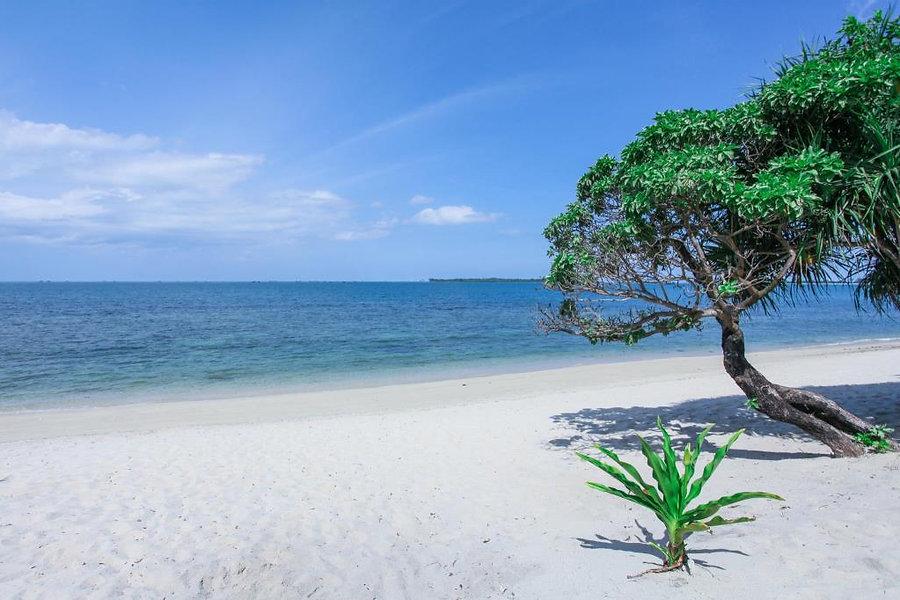 trikora beach.jpg