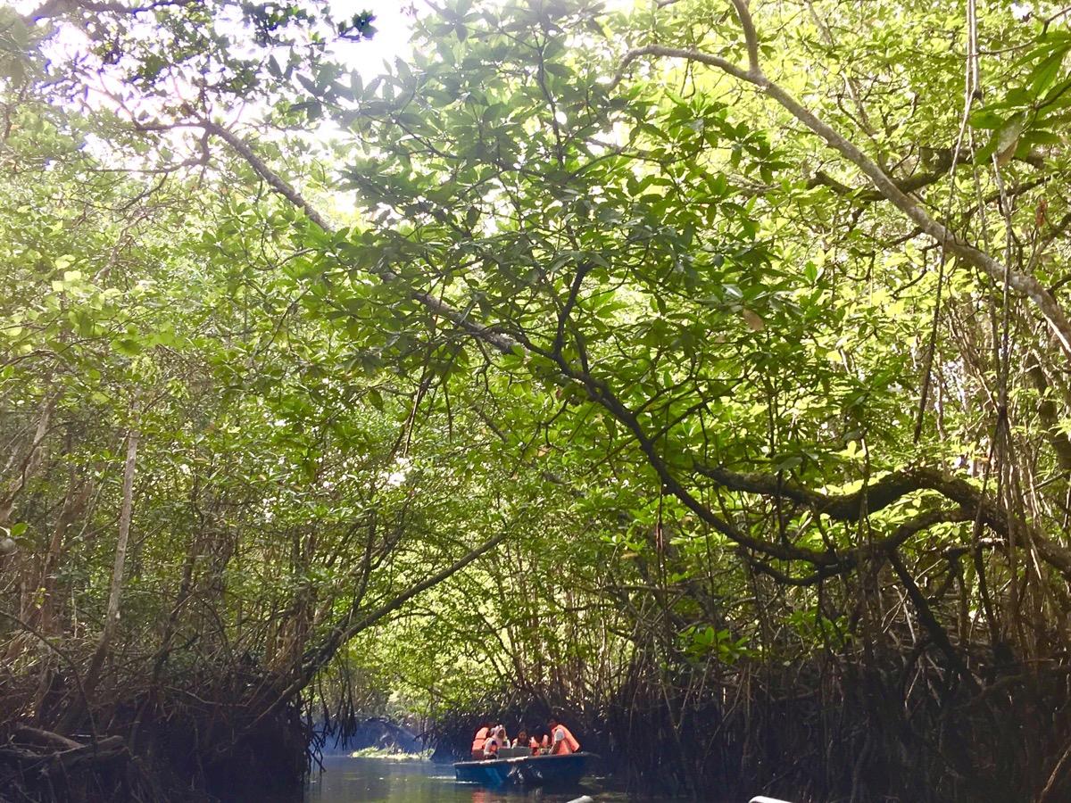 Mangrove Tour (Day / Night)