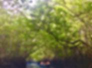 Day Mangrove River 日间红树林生态之旅 4.jpg