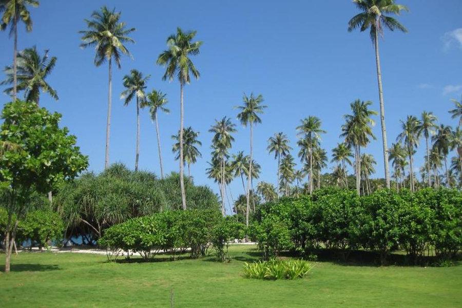 trikora beach club garden.jpg