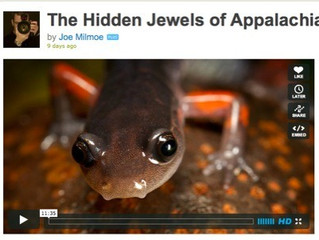 The Hidden Jewels of Appalachia Documentary highlights importance and threats to Appalachian salaman