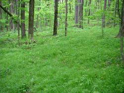 Sedge meadow understory