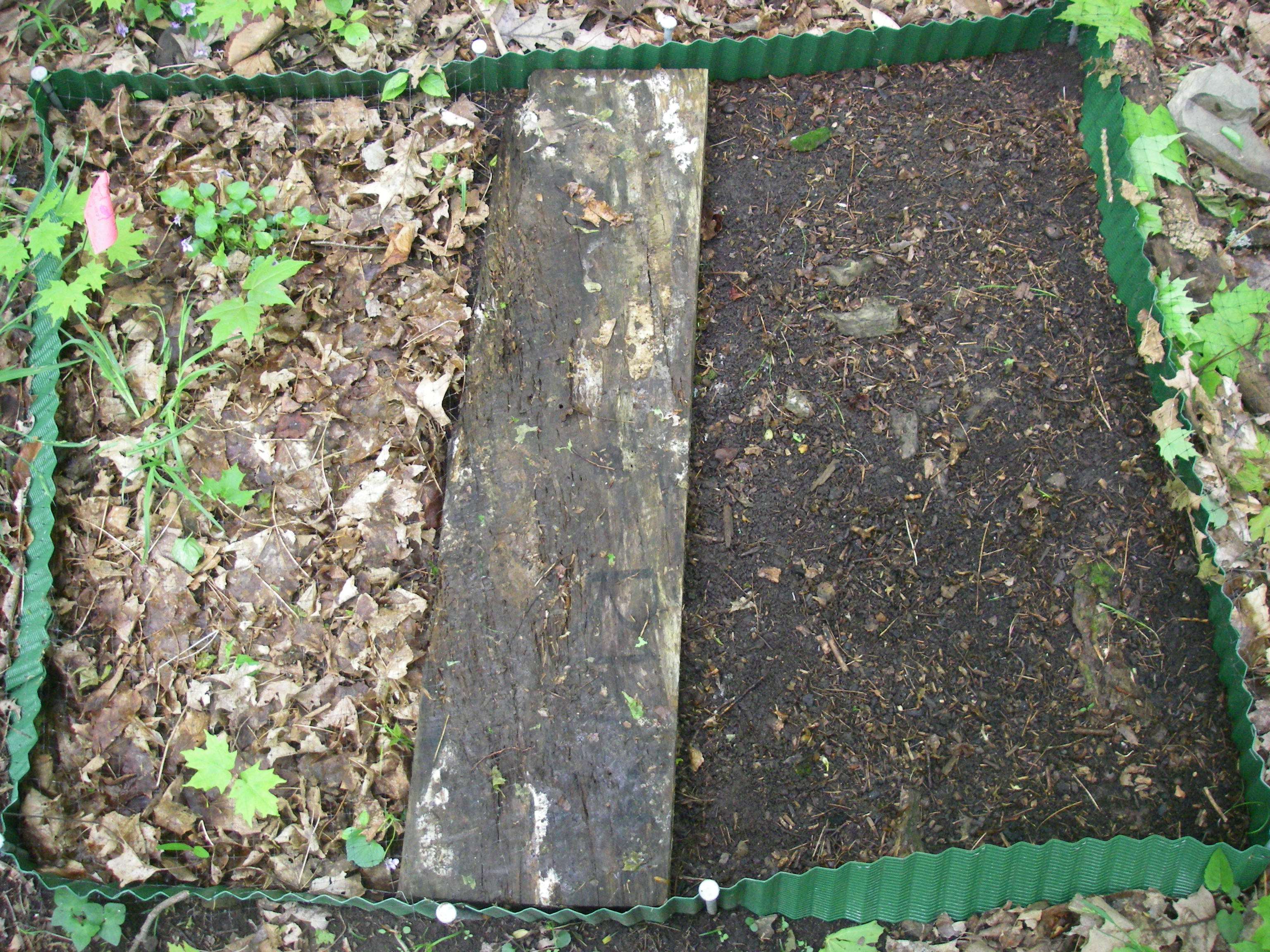 Litter plot R1-01 half veg and litter removed 21May08.JPG
