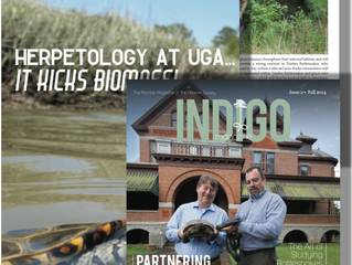 Indigo Magazine features emerging partnership with UGA
