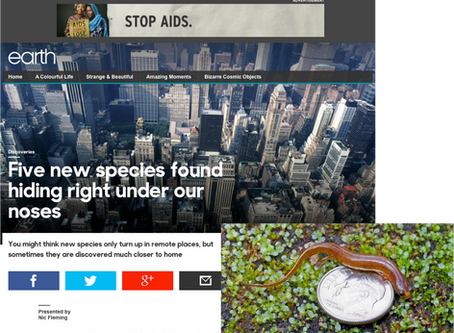 """BBC Earth profiles Urspelerpes discovery as one of """"Five new species found hiding right under our no"""