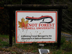 Arnot Forest