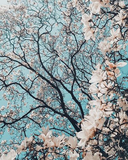 Spring Flowers.jfif