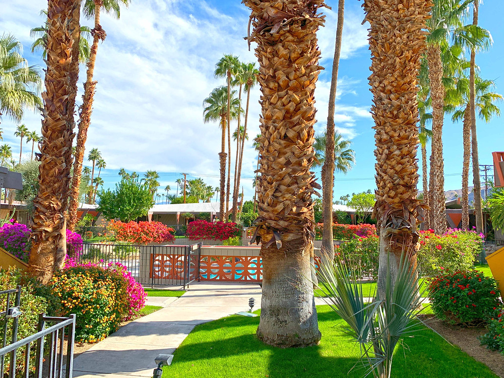 Palm Springs Contemporary design project