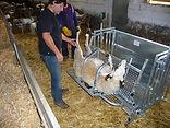 SheepMaster, Станок ветеринарный для обрезки копыт Javier Camara