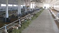 Javier Camara Spain оборудование для овец и коз, проект фермы овцы, проект фермы козы