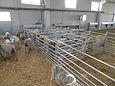 Родильный бокс для овец, Родильный бокс для коз, Javier Camara