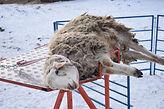 SheepMaster.Ru фото картинка параметры