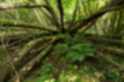 open_nest_2400_28.jpg