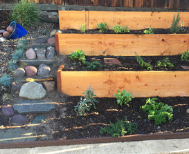 Herb garden on a slope