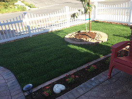 New lawn with mango trees and low-water flowers