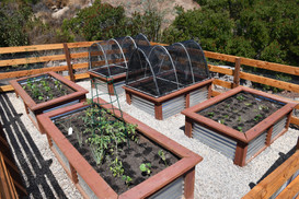 Corrugated steel raised beds are long lasting and safe for vegetables